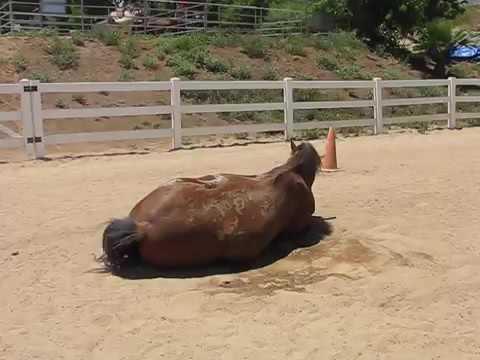 il-video-del-cavallo-e-della-sua-divertente-fuoriuscita