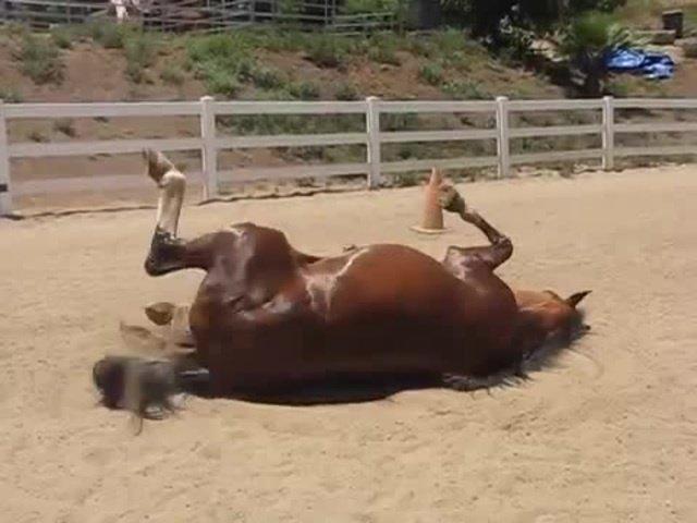 il-video-del-cavallo-e-della-sua-divertente-fuoriuscita2
