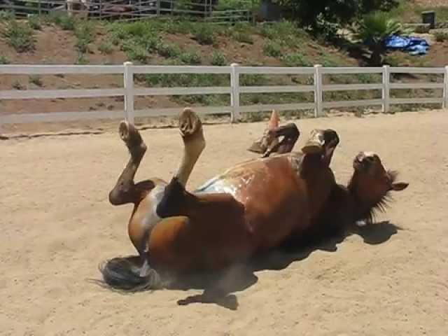 il-video-del-cavallo-e-della-sua-divertente-fuoriuscita3