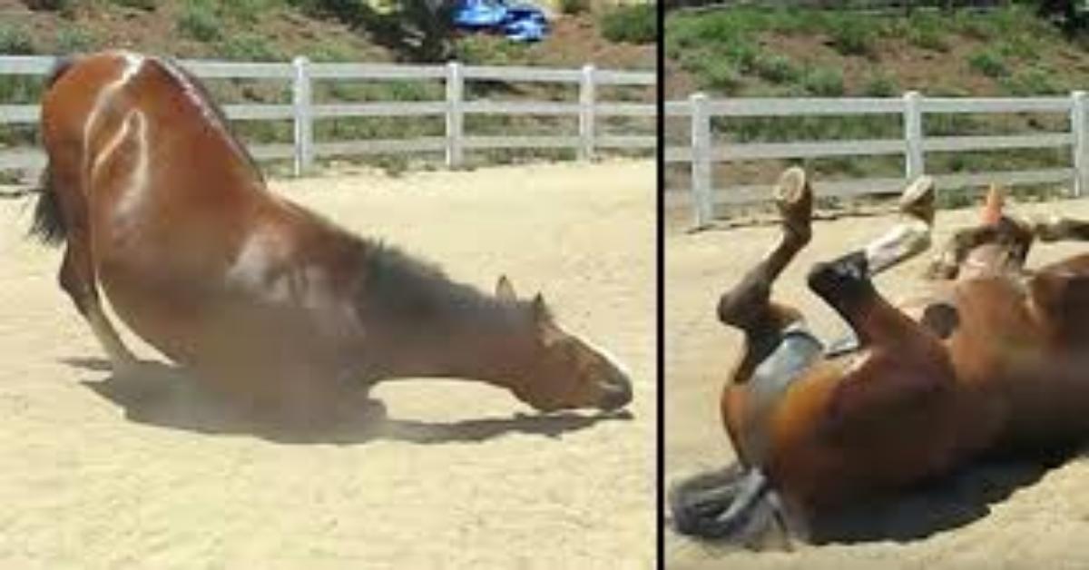 il-video-del-cavallo-e-della-sua-divertente-fuoriuscita41