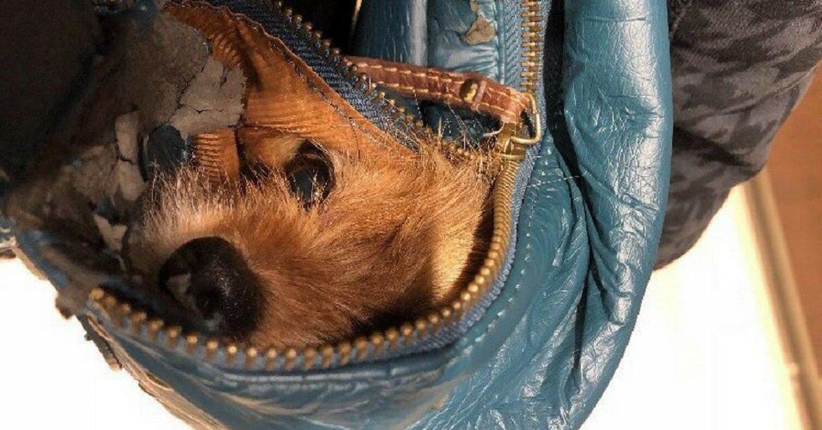 infermiera-fa-entrare-il-cane-in-ospedale-di-nascosto