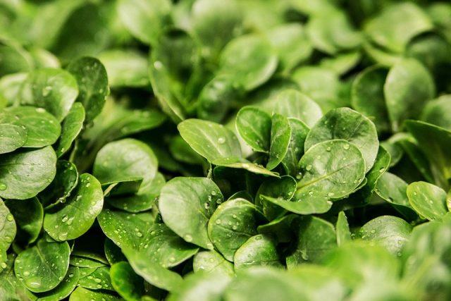 insalate-pronte-rischi