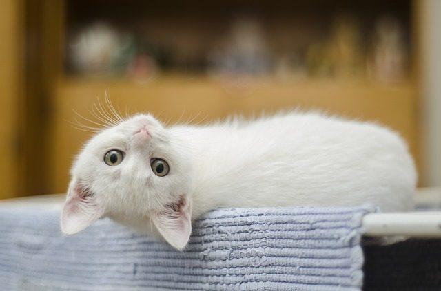 perchè i gatti fanno i bisogni fuori dalla lettiera