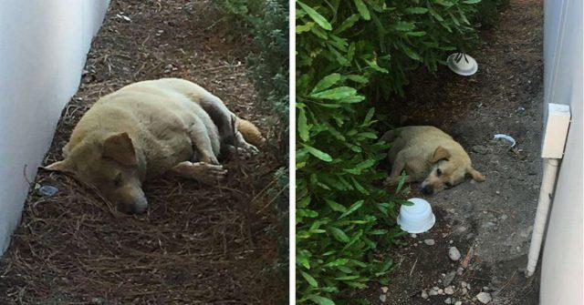 larry-il-cane-abbandonato-nel-cortile