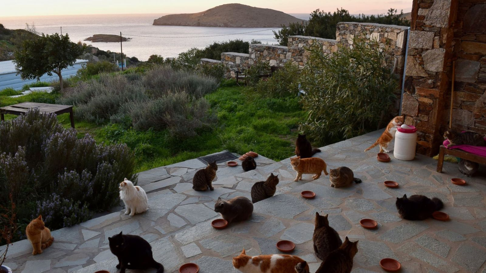 lavoro-con-gatti