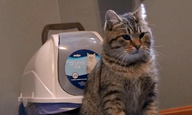 Gavin-salva-la-vita-del-gattino-abbandonato 3