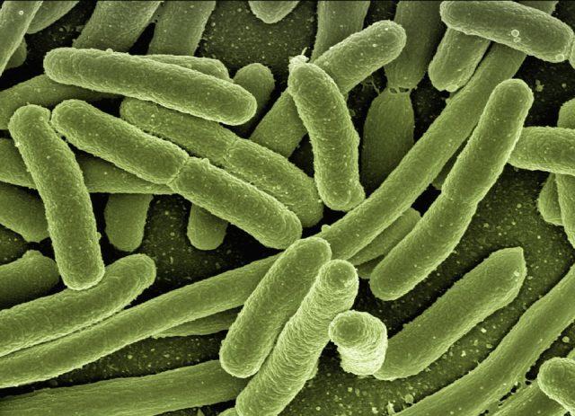 morbillo-malattia-infettiva