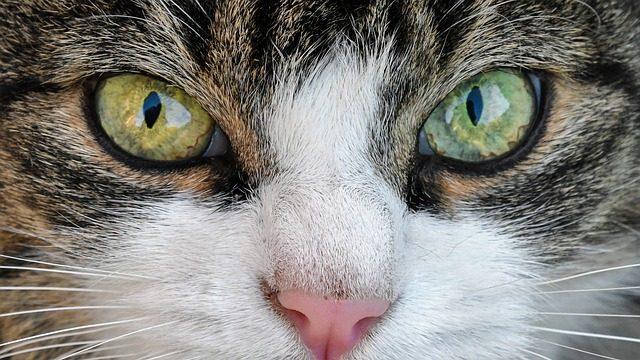 perchè-i-gatti-fanno-i-bisogni-fuori-dalla-lettiera