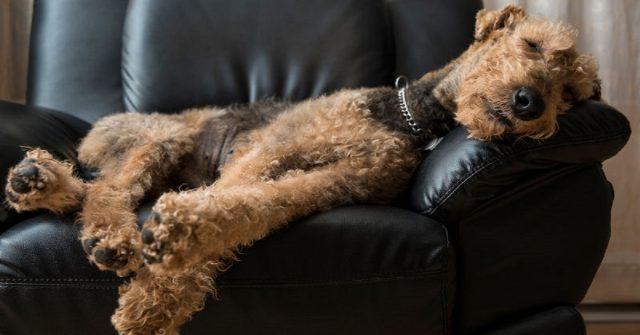 perche-i-cani-muovono-le-zampe-mentre-dormono