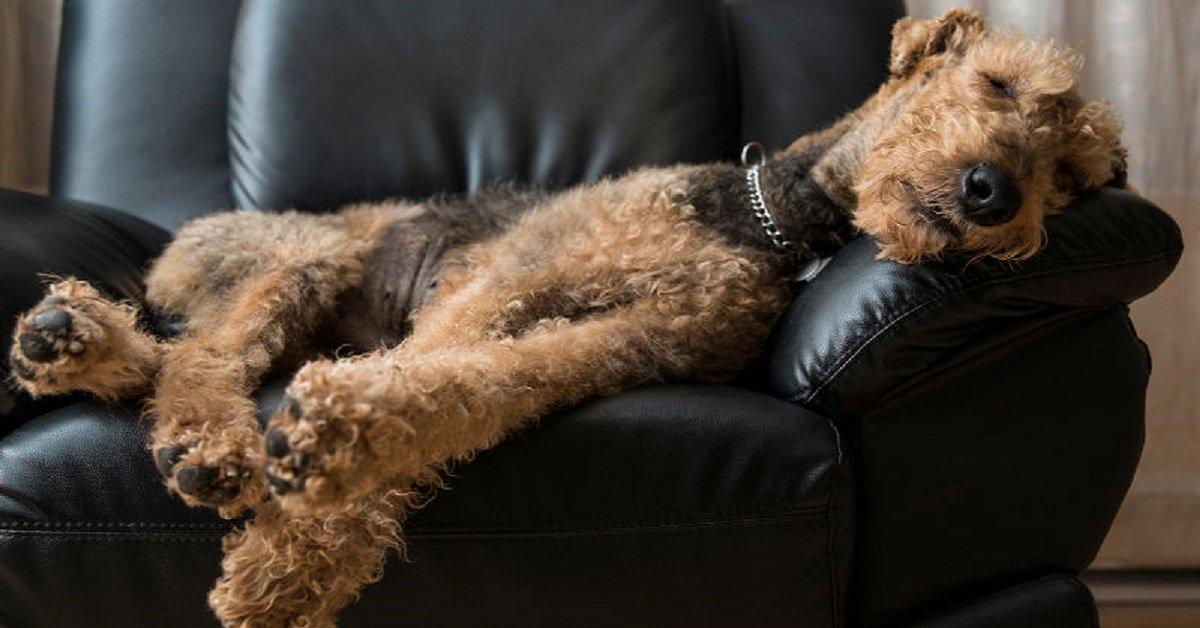 Perché i cani muovono le zampe mentre dormono?