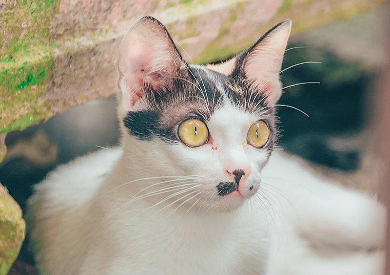 perche-i-gatti-fanno-i-bisogni-fuori-dalla-lettiera
