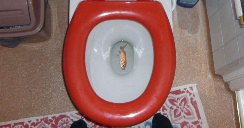 buttare un pesce morto o vivo nel water
