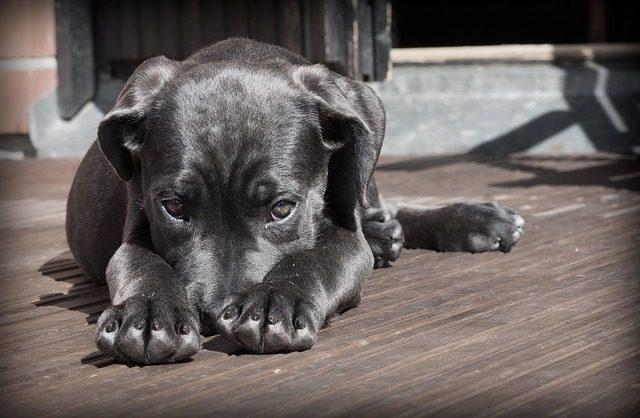 Come-capire-se-il-cane-è-triste