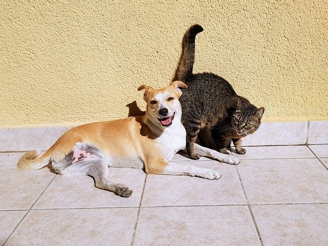 malattie-trasmissibili-tra-cane-e-gatto