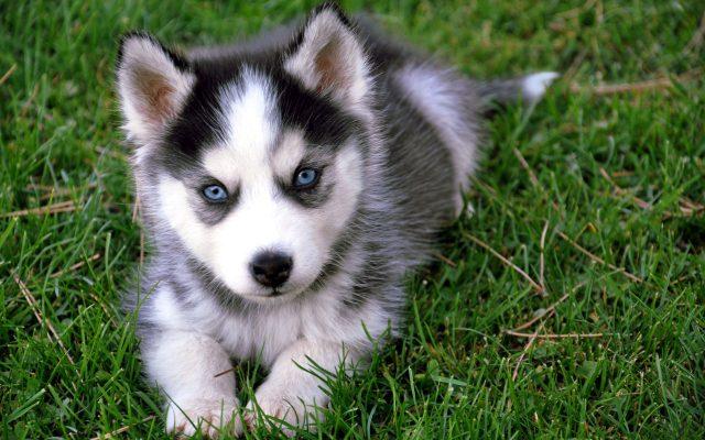 piccolo-cane