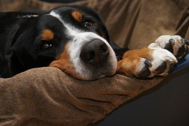 malattie-del-cane-anziano