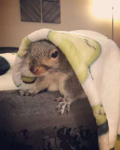 scoiattolo-copertina