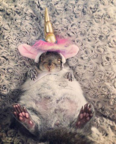 scoiattolo-felice