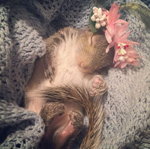 scoiattolo-fiori