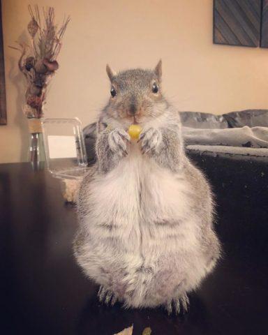 scoiattolo-mangia