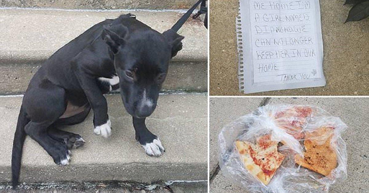 Serenity, la cucciola abbandonata con una fetta di pizza