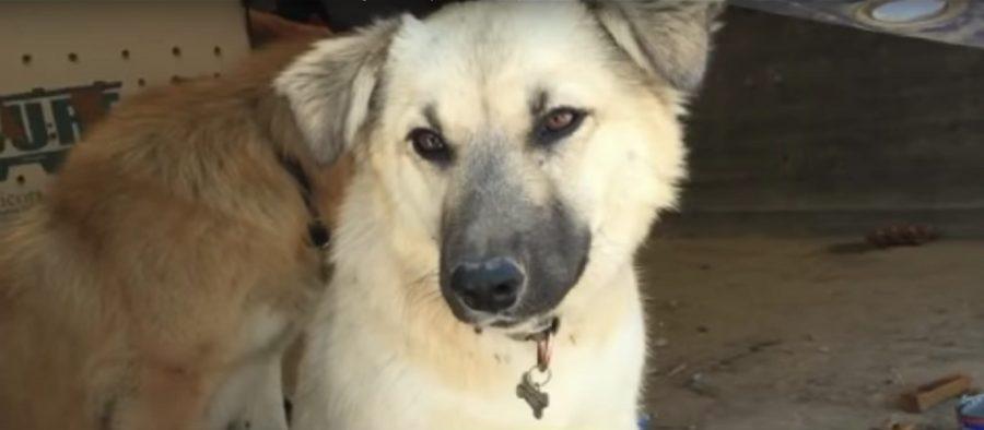 cane adottato in iraq