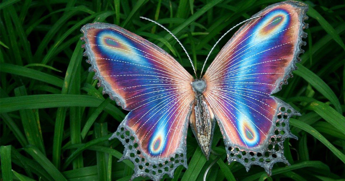 vedere-farfalle-spesso-il-significato