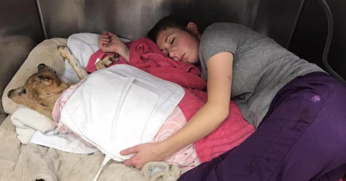 veterinario-dorme-con-il-cane-ustionato-che-sta-cercando-di-salvare