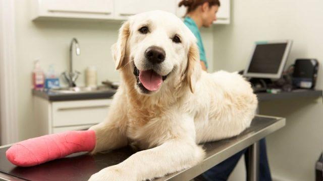 veterinario-rivela-cosa-fanno-i-cani-poco-prima-delleutanasia