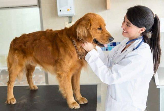 veterinario-rivela-cosa-fanno-i-cani-poco-prima-delleutanasia1