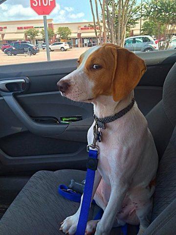 veterinario-rivela-cosa-fanno-i-cani-poco-prima-delleutanasia3