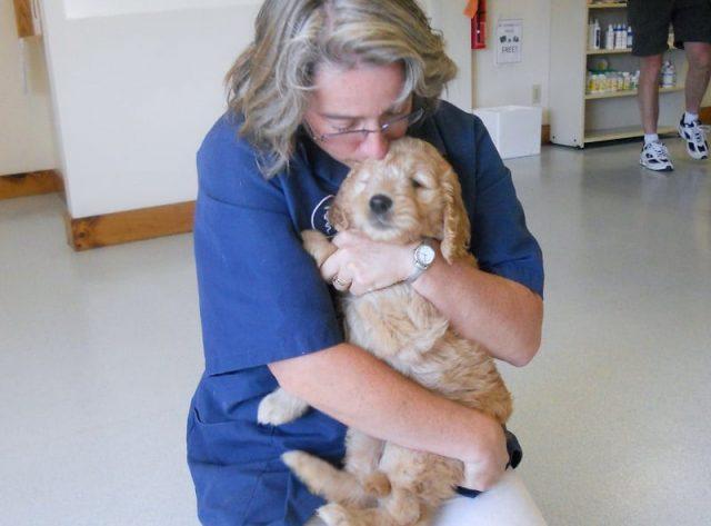 veterinario-rivela-cosa-fanno-i-cani-poco-prima-delleutanasia4
