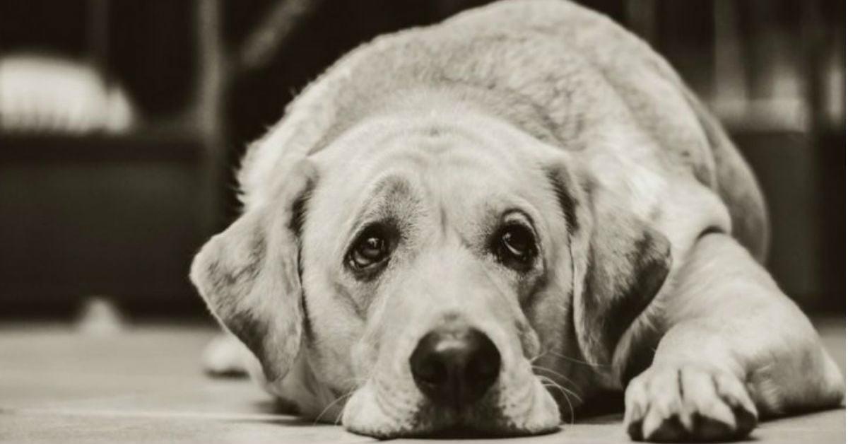 veterinario-rivela-cosa-fanno-i-cani-poco-prima-delleutanasia5