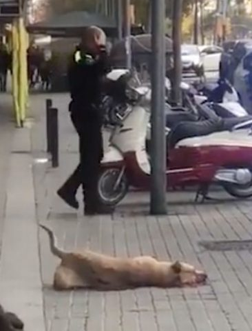 poliziotto-uccide-un-cane 4