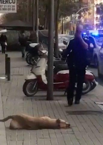 poliziotto-uccide-un-cane 3