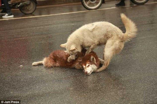il-cane-che-non-lascia-il-suo-fratellino-a-quattro-zampe