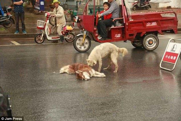 il-cane-che-non-lascia-il-suo-fratellino-a-quattro-zampe 2
