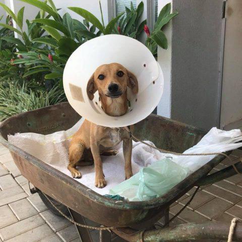 Quello-che-ha-fatto-Sue-per-il-cagnolino-abbandonato 3