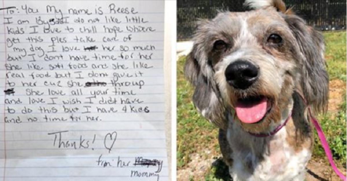 Reese-il-cagnolino-abbandonato-con-una-nota-al-collo