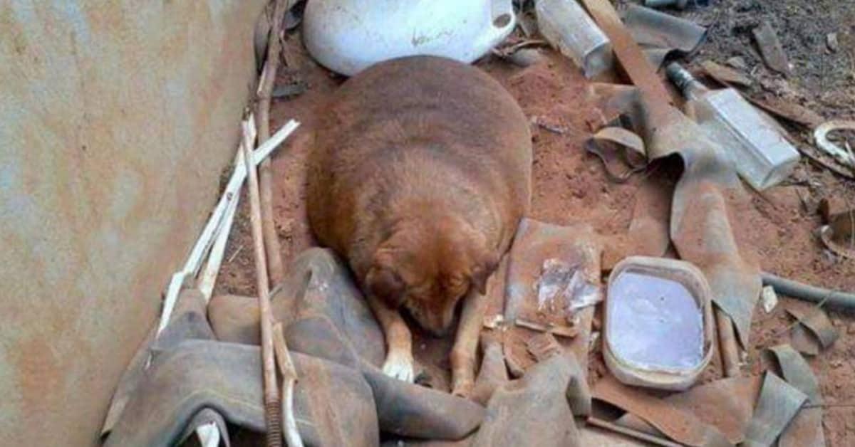 Bolinha-la-cagnolina-in-sovrappeso-che-veniva-derisa-da-tutti