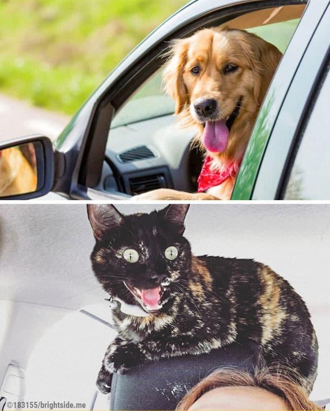 13 foto che dimostrano la differenza tra cani e gatti