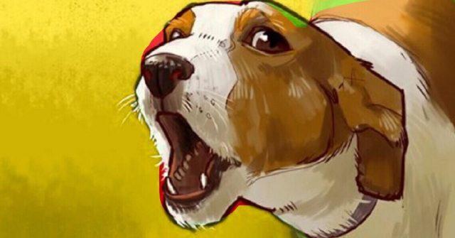 8-motivi-per-cui-il-tuo-cane-abbaia