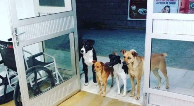il-legame-tra-i-cani-ed-il-senzatetto