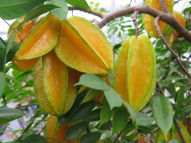 Carambola-frutto