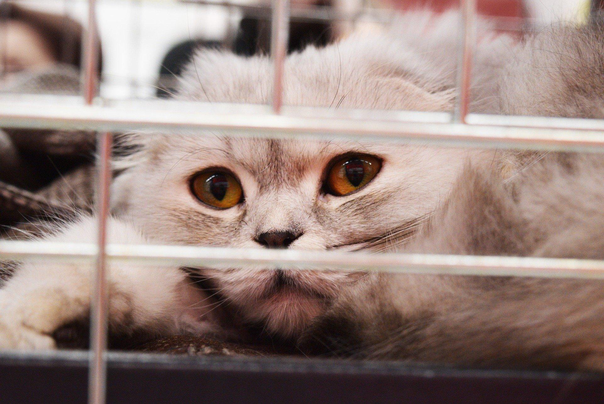 Come portare un gatto dal veterinario