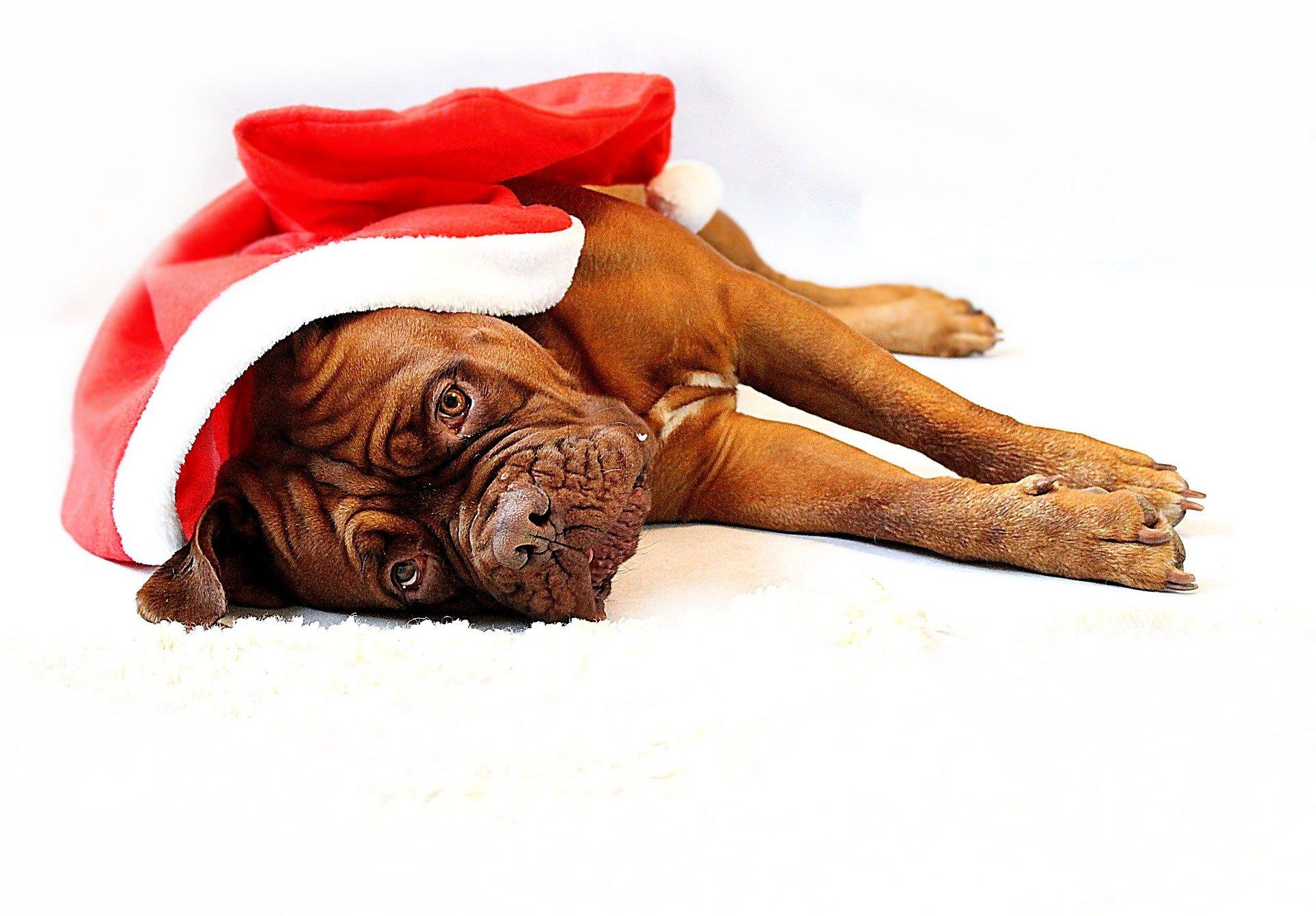 Come proteggere gli animali dai botti di Capodanno