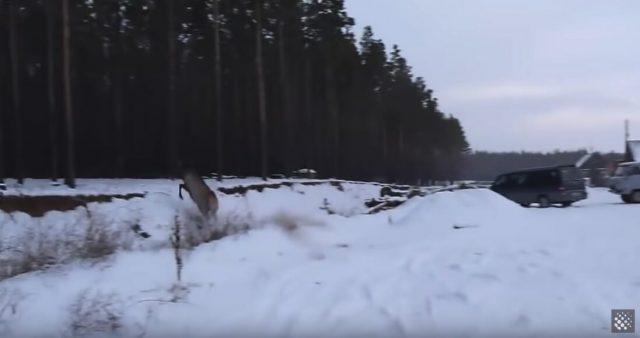 il-salvataggio-del-cervo 3