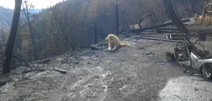 Era scomparso durante il grande incendio, cane ritrovato un mese dopo