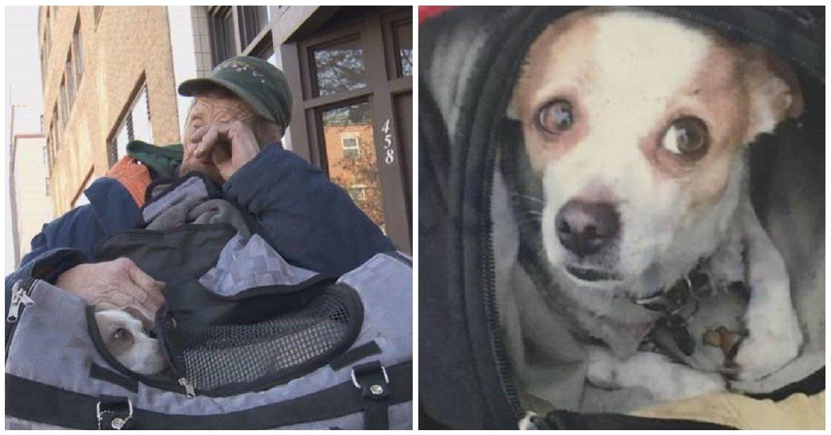 Eroe salva un cagnolino che era stato da poco rapito