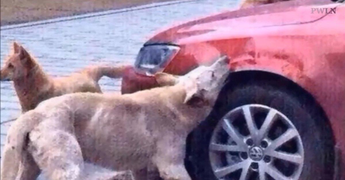 Preso a calci, cane si vendica (portando con sé alcuni 'amici')
